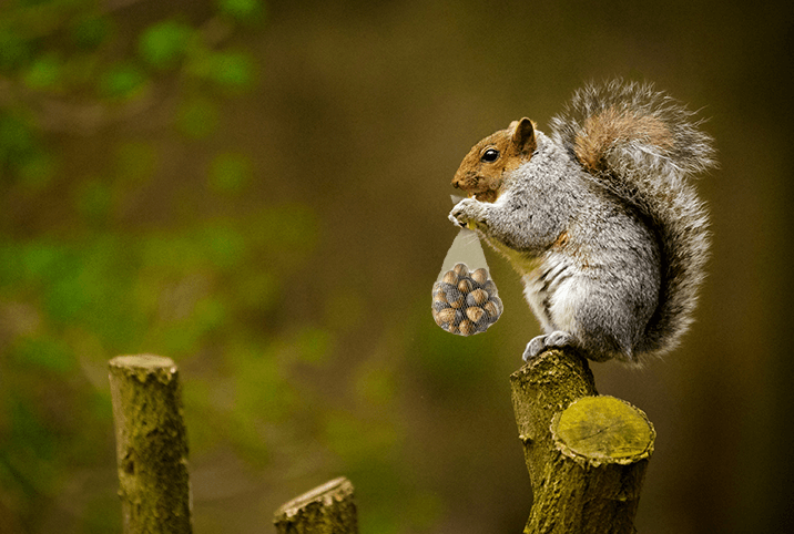Squirrels are Both Rational and Consistent; Humans are Human